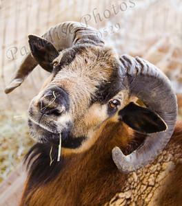 Ram 1598 3