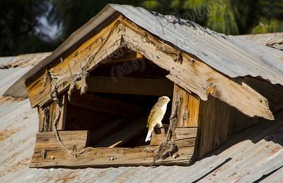 Roof window bird Schnepf1748