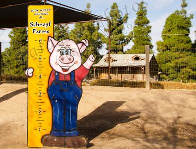 Piggy measure1505