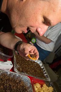 Gregory Rodolico, Brooklyn, NY enjoys a snack of crickets