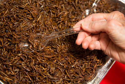 Grub worms as food