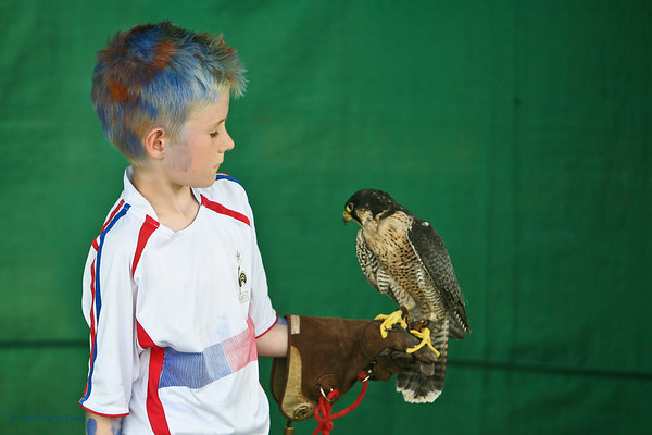 The boy and the kestral