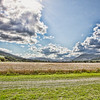 Cornfields of Aberfeldy