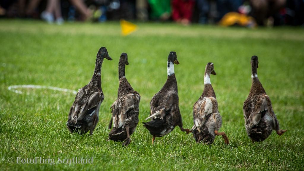 Hi Ducky!