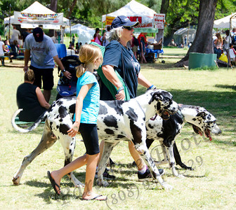 Dogs at Scottish Fest 0412 3739