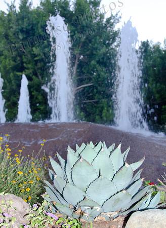 Cactus & fountina 6838