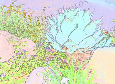 Cactus sketch 6925