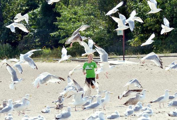 0906 seagull boy 3