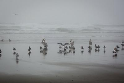 seaside-2071