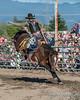 Saddle Bronc Riding - 3