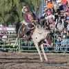 Ranch Saddle Bronc - 1