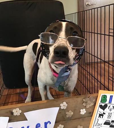 Senior Dog Daycare Party
