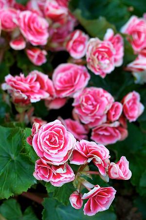 Sentosa Flower Show 2012