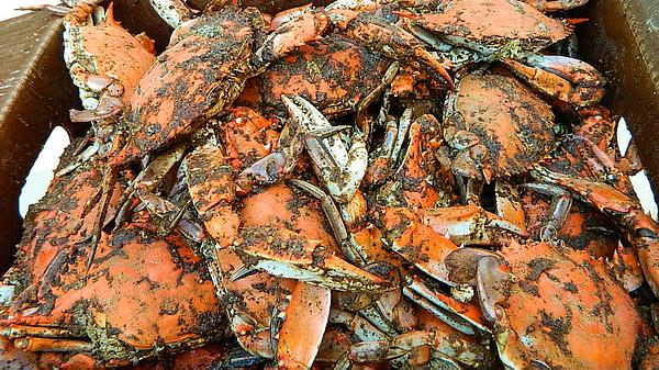 Serdehely Crab Feast 8/15/2015