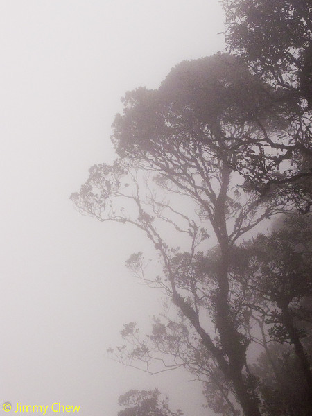 Trees shrouded by mist.