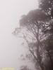 Trees shrouded by mist.