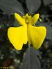 Vibrant Butterfly Flower.
