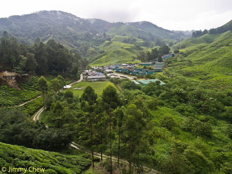 View of tea valley from Sg Palas Tea Centre (tea house).