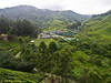 View of tea valley from Sg Palas Tea Centre (tea house).