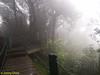 Man-made walkway to Gn Irau trailhead.