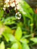 Hanging droplet.