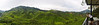 Pano shot of tea plantation. In this photo: Alex.