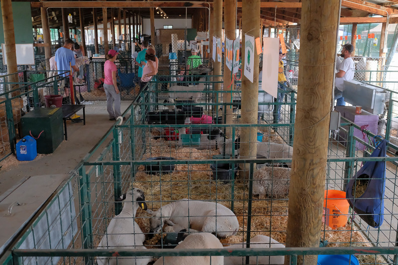 Justin Sheely | The Sheridan Press<br /> People take care of their livestock during the Sheridan County Fair at the Sheridan County Fairgrounds sale barn Thursday, Aug. 2, 2018.