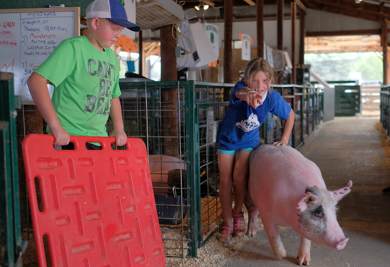 Justin Sheely | The Sheridan Press<br /> Eleven-year-old Mason Mayfield, left, blocks a lane as Willow Koltiska, 9, directs her pig back to the pen during the Sheridan County Fair at the Sheridan County Fairgrounds sale barn Thursday, Aug. 2, 2018.