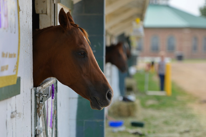 Justin Sheely | The Sheridan Press<br /> Horses look out of their stables during the Sheridan County Fair at the Sheridan County Fairgrounds sale barn Thursday, Aug. 2, 2018.