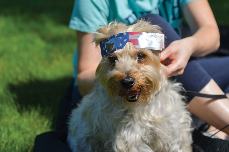 Ashleigh Fox | The Sheridan Press<br /> <br /> Owner Sherry Reilly helps her family pup, Bentley, prepare for the solar eclipse by sharing her shades. The Reilly family was found reading about the solar eclipse from a book while on the lawn of the Trail End State Historic Site.