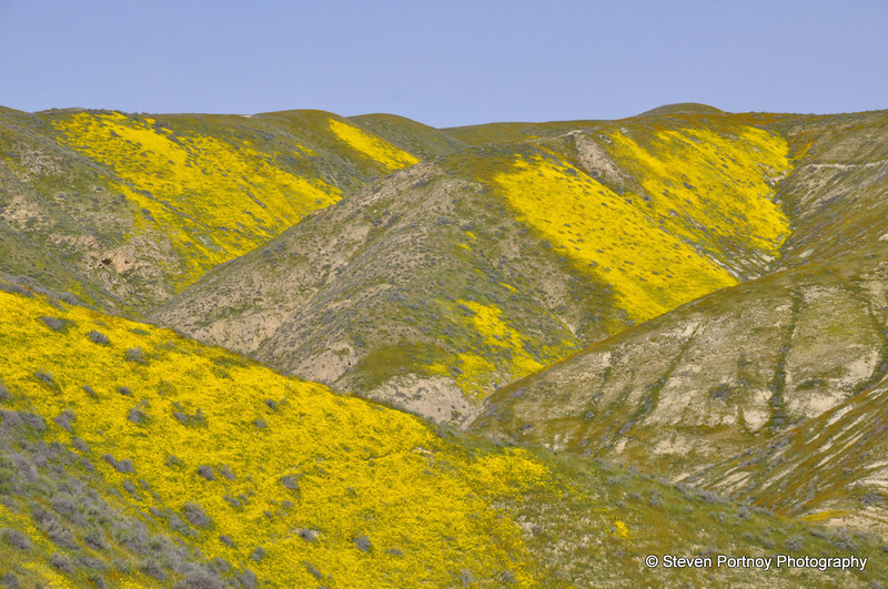 Wildflowers, Carrizo Plains, National Monument, CA, March 20, 2010