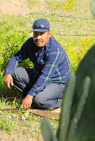 Gardener Singh 6185