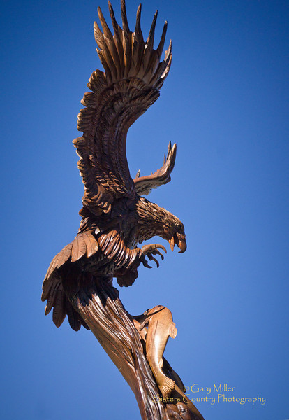 Eagle catching fish - Lifsize sculpture by world renown chainsaw artist J. Chester Armstrong - Sisters Outdoor Quilt Show 2011 - Photo by Gary N. Miller - Sisters Country Photography