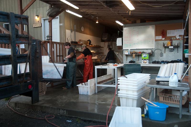 The fish processing crew