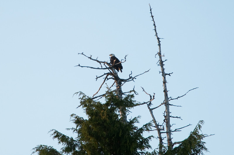 We noticed this Eagle watching over the resort for quite a while