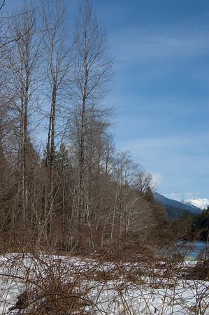 Skagit River Eagles