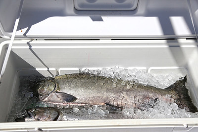 Skc Puget Sound Anglers - NW Salmon Derby Series