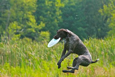 Skyhoundz at BowWow Beach (Best)