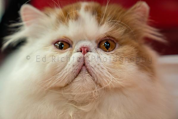 Skyway Club Cat Show