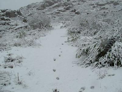 snow, 21 Nov 2004