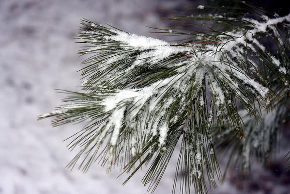 Snow January 7,2009