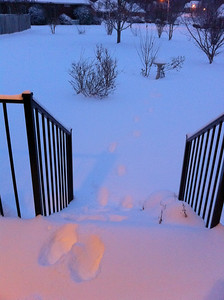 Yep, 8 inches of snow on those steps going down to the yard.