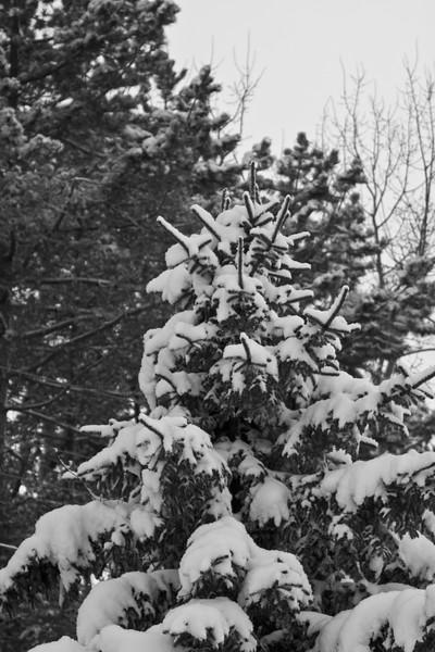 Snowicane 2010-0120.jpg