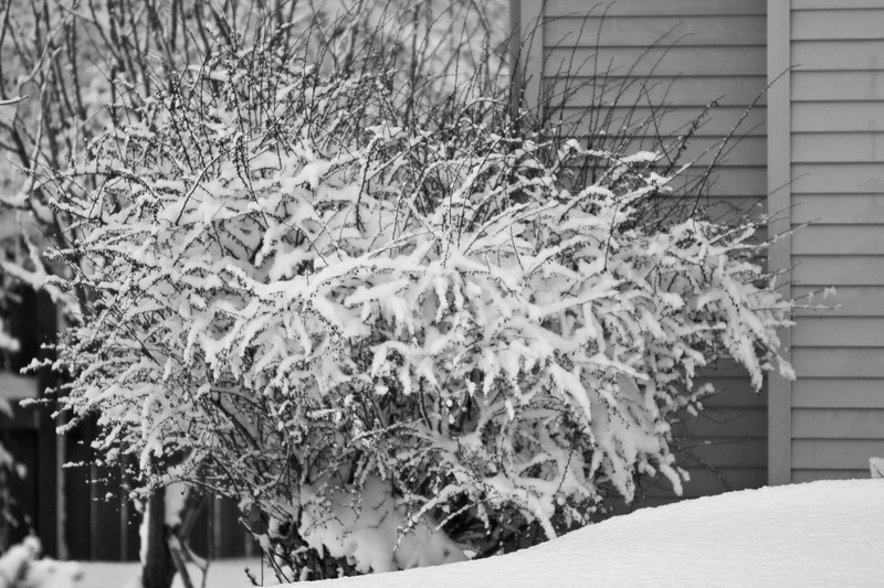 Snowicane 2010-0119.jpg