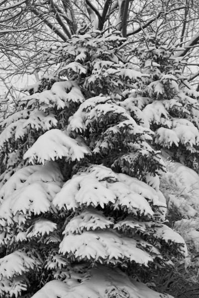 Snowicane 2010-0121.jpg