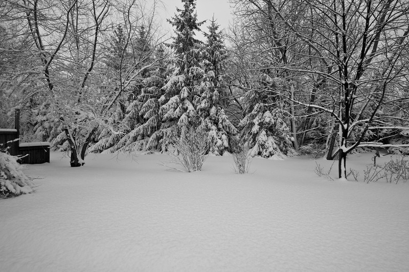 Snowicane 2010-0101.jpg