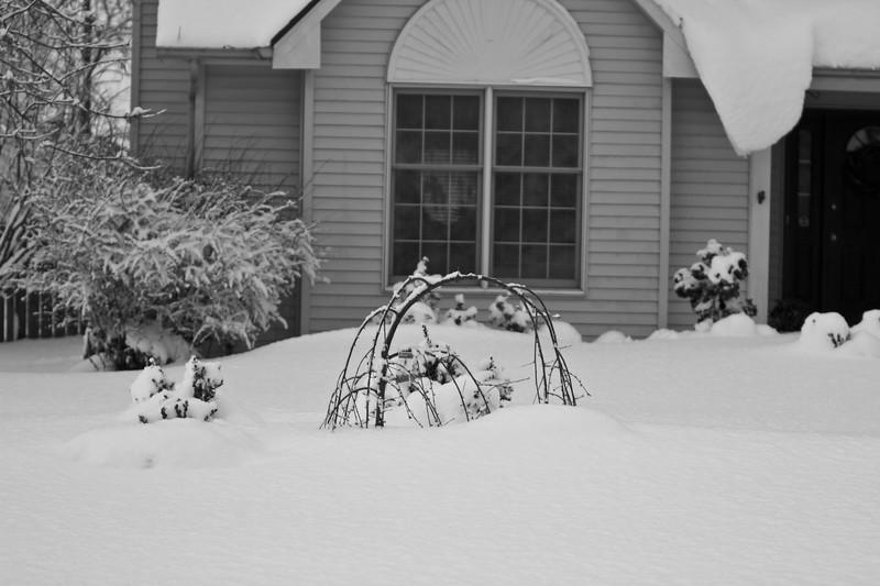 Snowicane 2010-0117.jpg