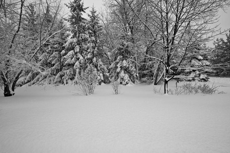 Snowicane 2010-0100.jpg