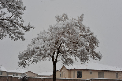 See photos of heavy snow fall in Las Vegas from December 2008 taken by Mark Bowers.