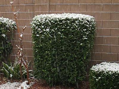 Video-1st-snow-in-backyard-vegas 12-15-08